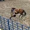 gmc_rodeo_9126