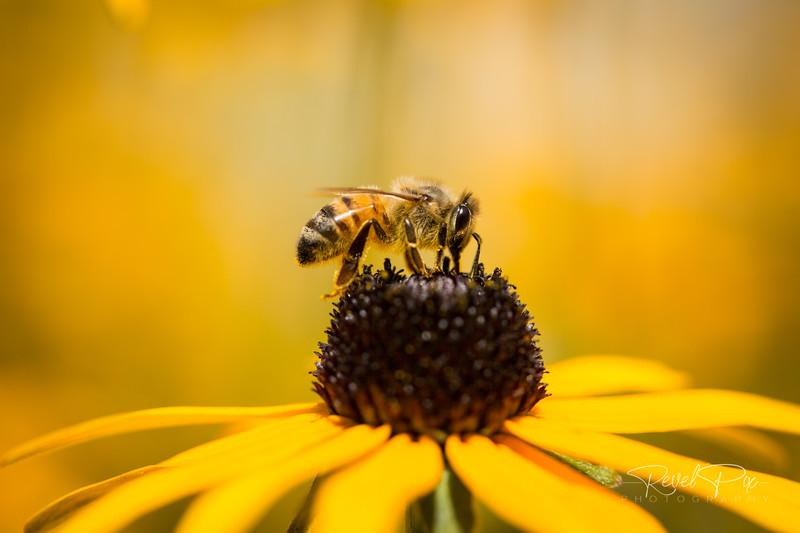 Bee Nectar Close Up Macro