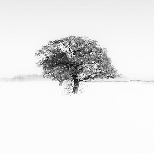 Barnby Dun Snow Tree