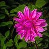 Garden flower Barnby Dun