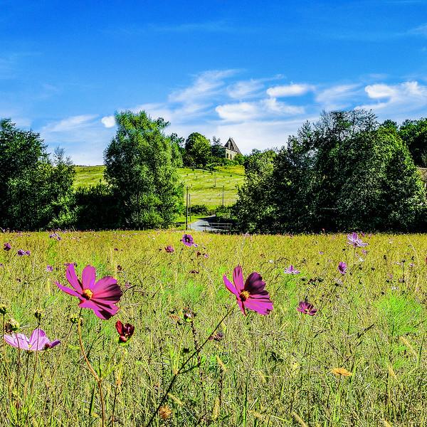 Monpazier wildflower meadow, Dordogne, France