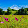 22. Wildflower meadow Monpazier France