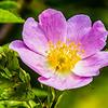 12. Garden flower