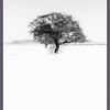2. Snow Tree