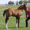 Catty's First Foal