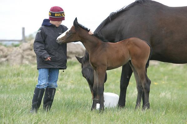 2010 Royal Quik Frenchman Foals