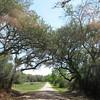Narrow back roads and shady trees