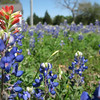 RROC Texas Bluebonnet Run March 28, 2009
