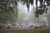 Oaks - Spring Time<br /> Bon Secours St. Francis Hospital<br /> Charleston, SC<br /> Joan Perry