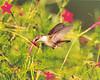 1st Prize - Pets & Wildlife<br /> Leah Sparks - Hummingbird
