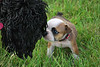 3rd Prize - Pets & Wildlife<br /> Teresa Swanger - Nose to Nose