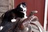 Karen Linder <br /> 2nd Prize Pets & Wildlife