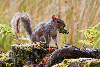 Squirrel with prize