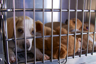 //TheRescueTrain.org