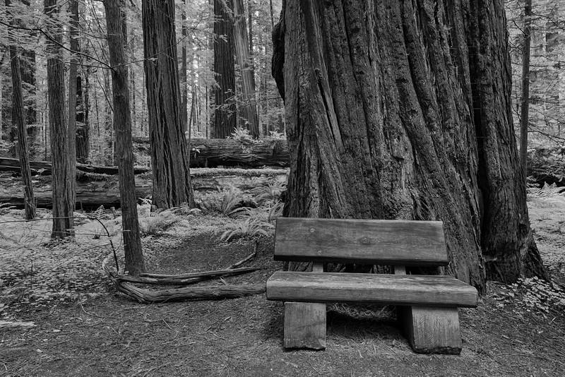 Bench - Near Arcata, CA