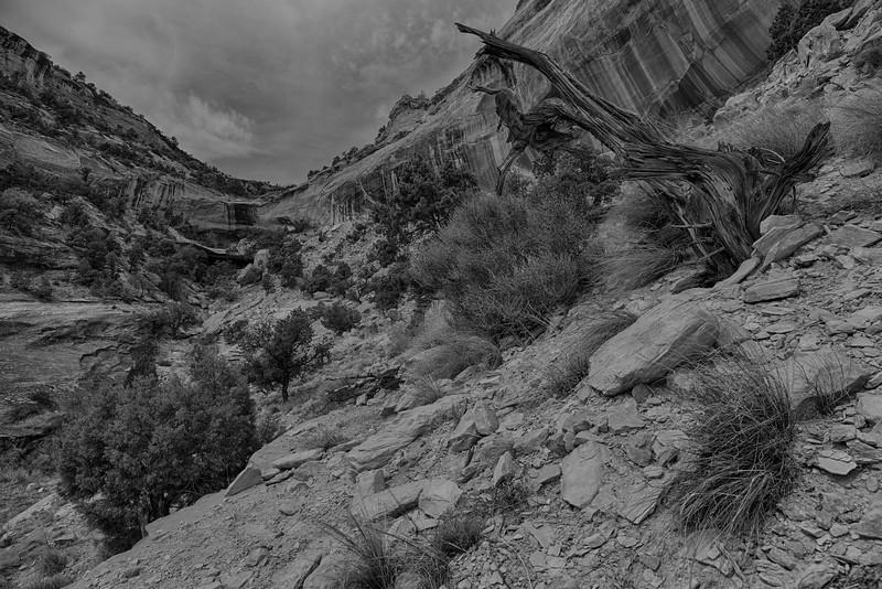 Canyon's End - Colorado National Monument, CO