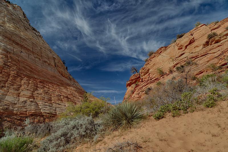 Desert Textures - Zion National Park, UT