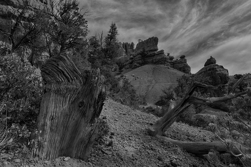 Wood Grain - Bryce Canyon National Park, UT