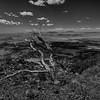 Capulin Tree - Capulin National Monument, NM