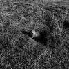 Dog of the Prairie - Grand Teton National Park, WY