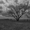 Lone Tree - Near Welty, OK