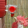 Chicken Watering Systems