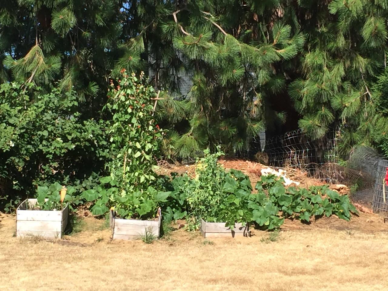 Small raised garden boxes