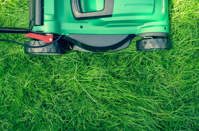 Natural Lawn Care Tips and Hacks