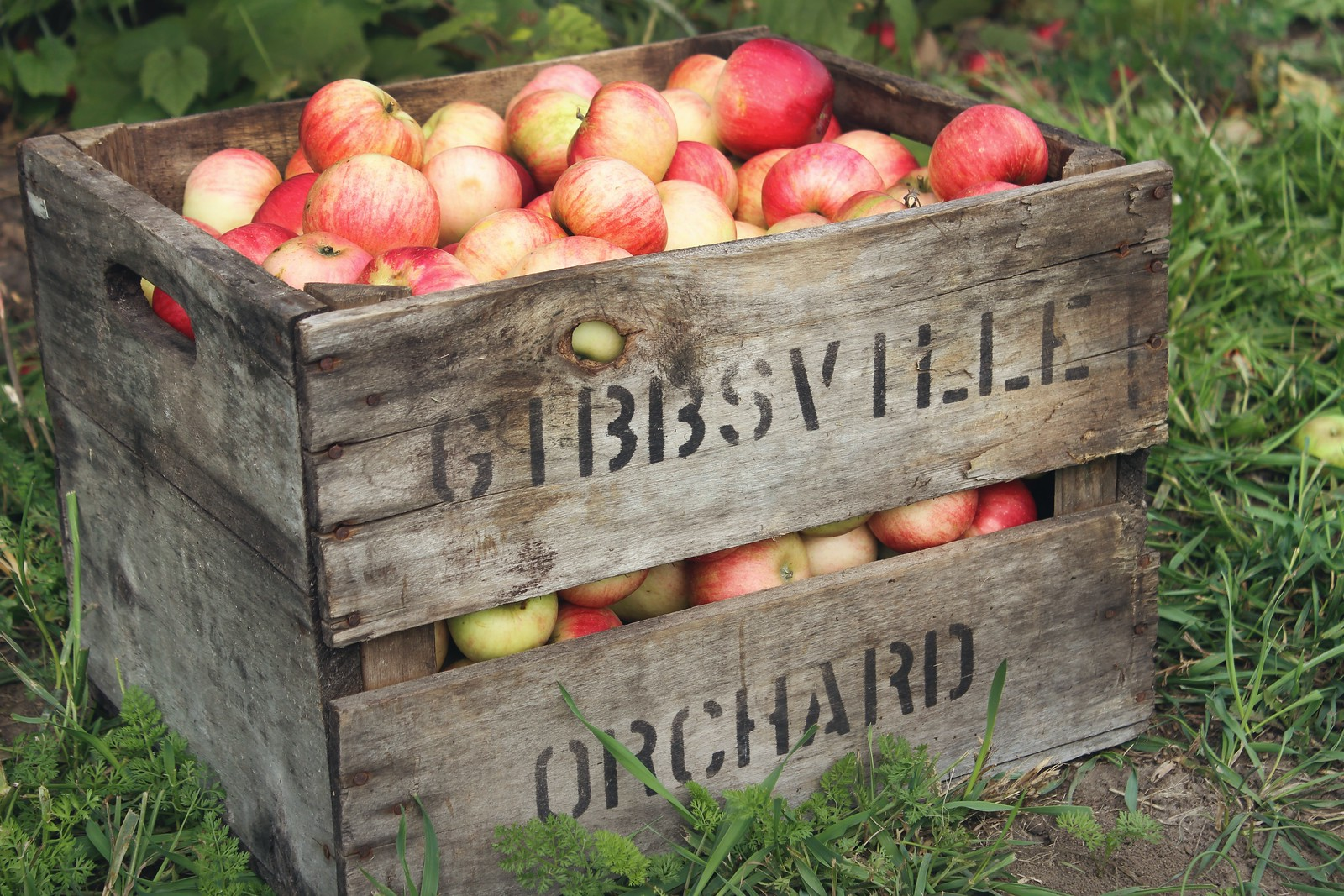 storing apples in crates