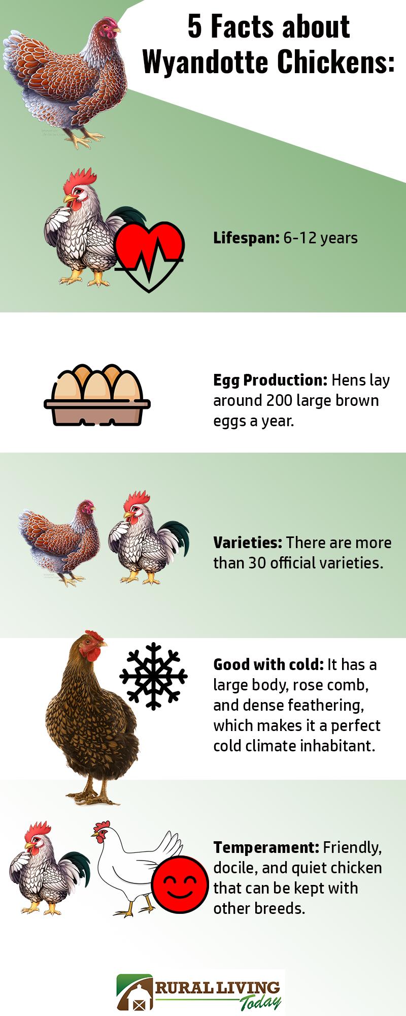 Wyandotte Chicken Guide