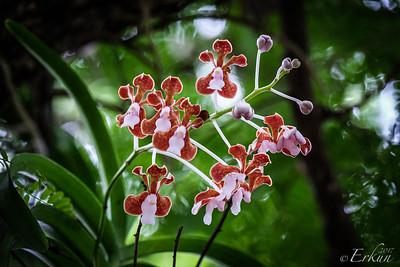 Orchids on Dragon Trek