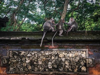 Uluwatu Temple Macaques