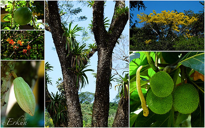 Plants @ Hotel Villa Lapas