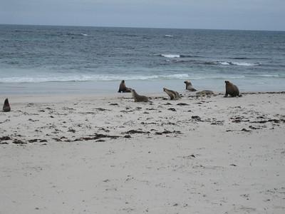 South Australia - Dec 08