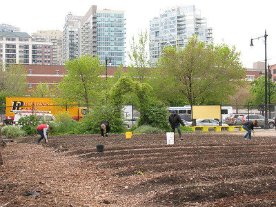 2012-04-25 Chicago Lights Urban Farm Workday for SUST 350