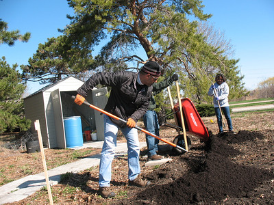 Now it's time to work by spreading compost! John and company work in the garden by raking out the wheelbarrowed composted soil.