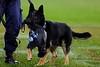 CHUCK, THE POLICE DOG