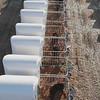 Grabación aérea de los terneros en la macro explotación de la empresa Valle de Odieta