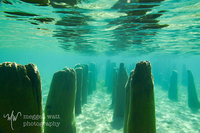 TLR-20140929 - Underwater Cathedral; Dock Pilings at Crescent City, taken with Outex Water Housing