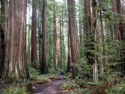 California Redwoods with Chris  ,Avenue of the Giants