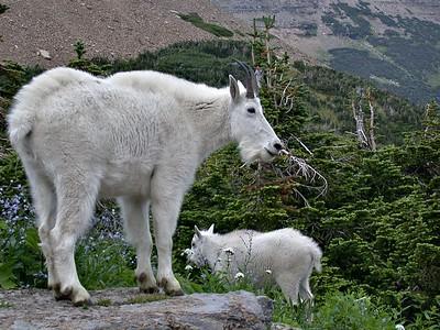 GoatMom&baby - Version 2