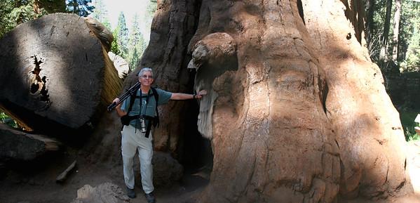 Sequoia National Park  Hendrick's Park, Eugene, OR Rhododendron garden