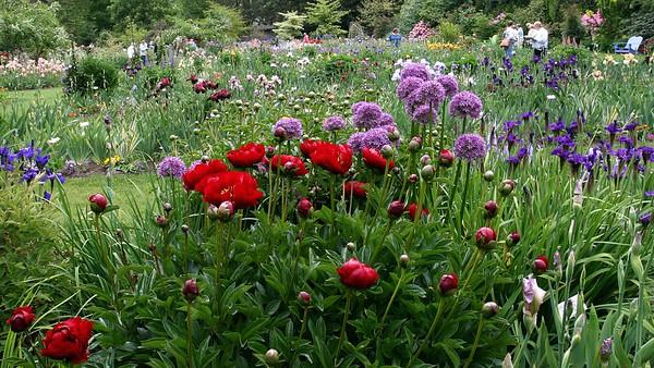 GardenPeoniesAliumIris16x9.5642