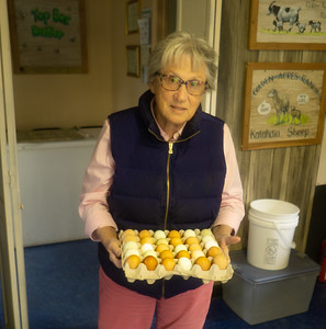 Owner Bobbie Golden showing her multi colored eggs, sometimes called Easter eggs, from her chickens.