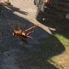 Big wasp on our screen