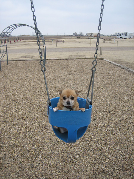 oh...the little baby in the baby swing.