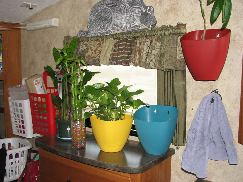This is where most of my plants live when we are parked ...