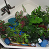 Plants live in the bathtub while we travel ...
