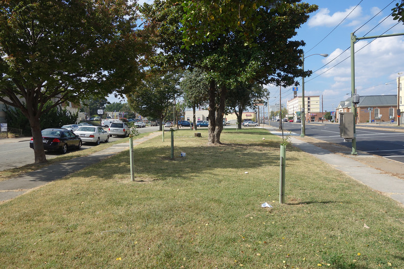 Median at W. Broad St & Wayne St. Found 6 willow oaks, 1 bald cypress, and 2 empty tubes.