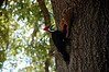 woodpecker over my camper andy